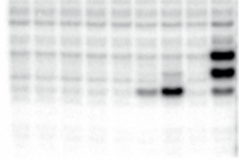 Protein footprint on RNA